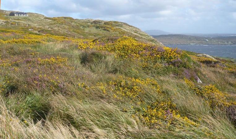 Jeder Naturliebhaber wird in Irland voll auf seine Kosten kommen