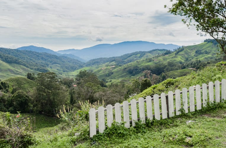 Die Cameron Highlands | Foto: Tanja