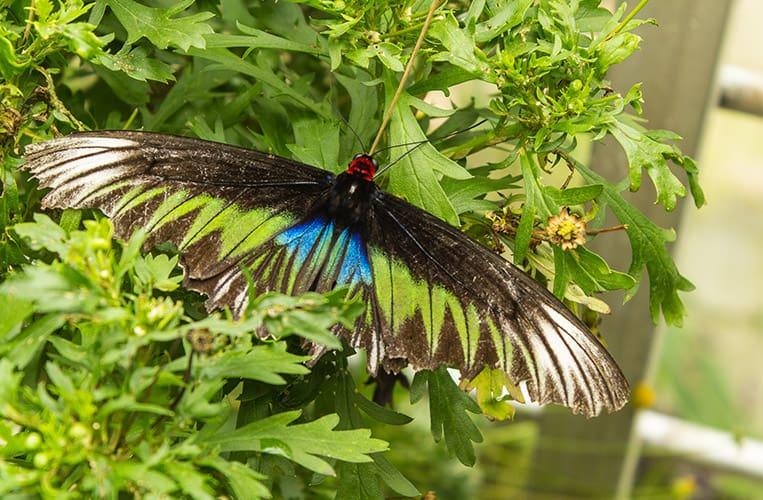 Schmetterling im Butterfly Park