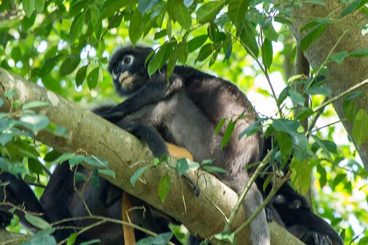 Ich liebe Affen!