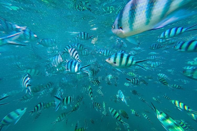 Das wurden auf einmal ganz schön viele Fische