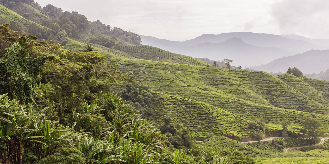 Die Cameron Highlands, Malaysia