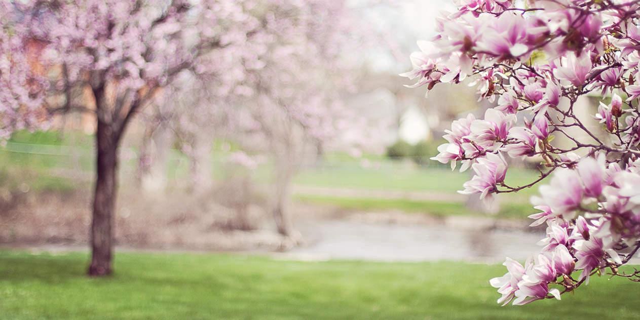 Top-Reiseziele im Frühjahr
