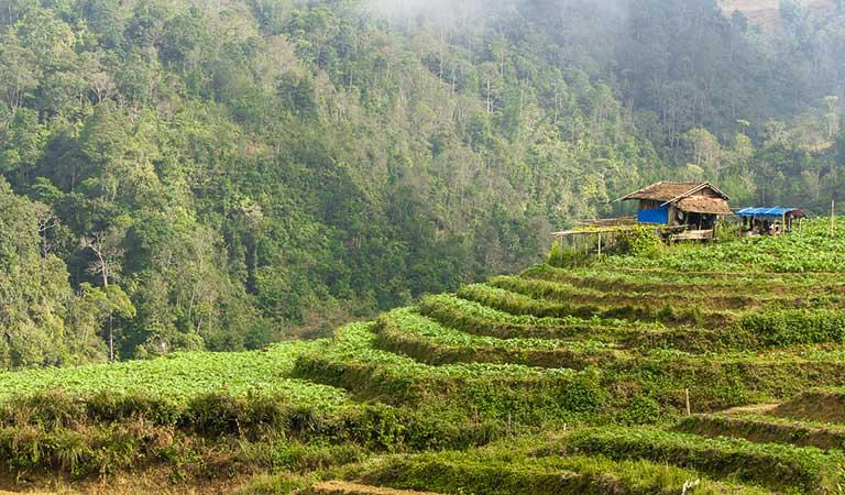 Inmitten der Reisfelder