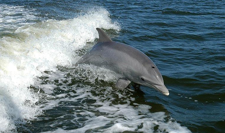 Mit wilden Delfinen schwimmen