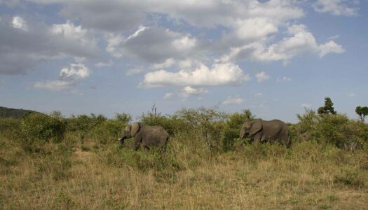 Kenia – Eine kulinarische Safari