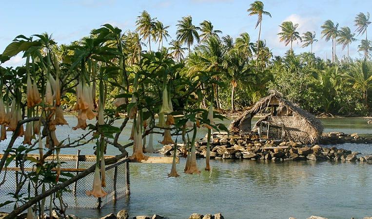 Die Fischfangbecken im Marae Taputapuatea
