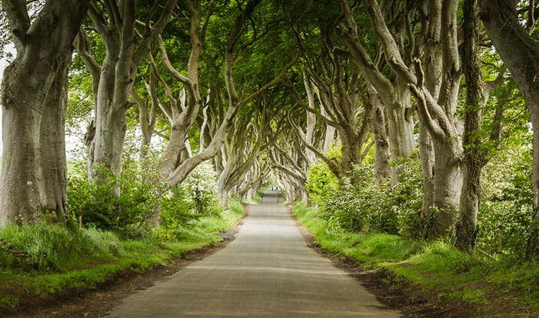 Dark Hedges – Nordirland