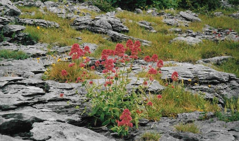 Die faszinierende Steinlandschaft The Burren