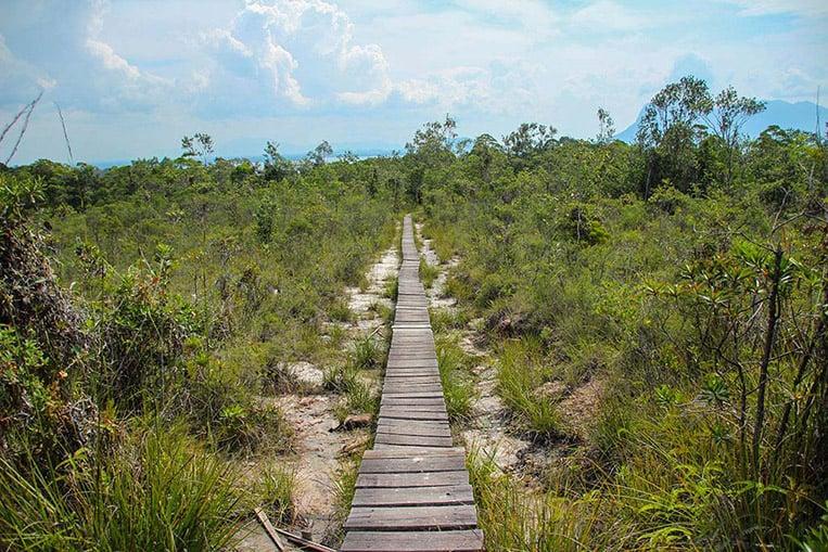 Heidewald im Bako Nationalpark | Foto: Carina