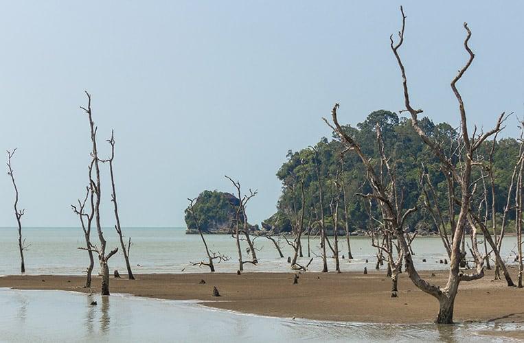 Der Bako Nationalpark