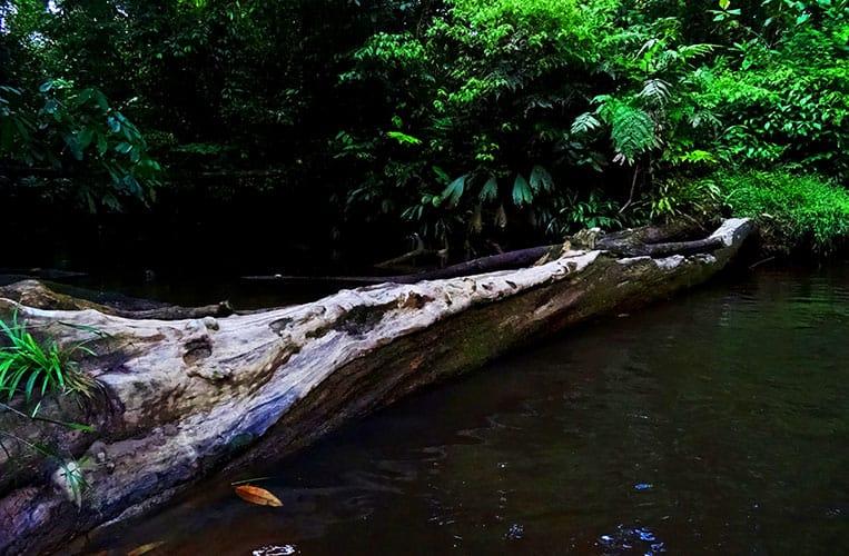 Ein Ärmelkanal des Amazonas