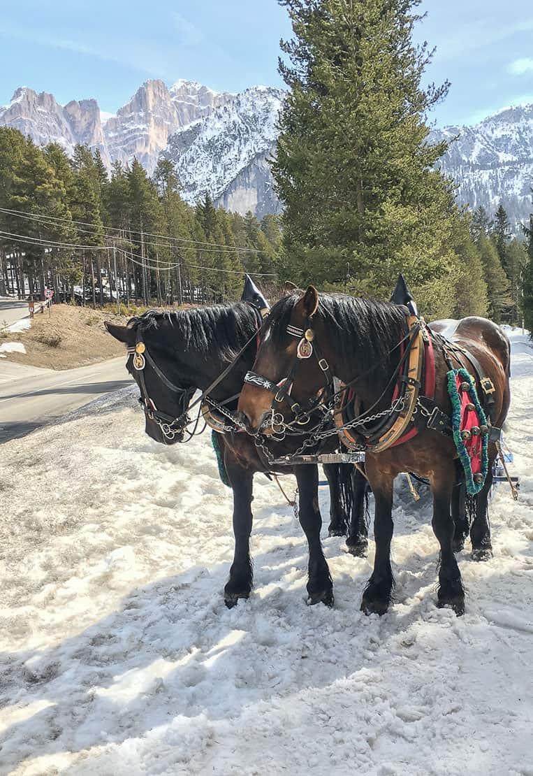 Pferdekutsche in Armentarola