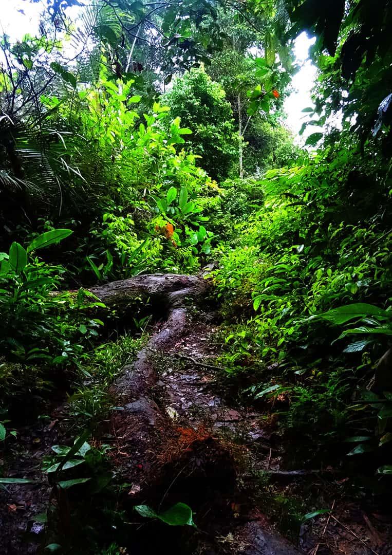 Die Tiefen des Regenwaldes