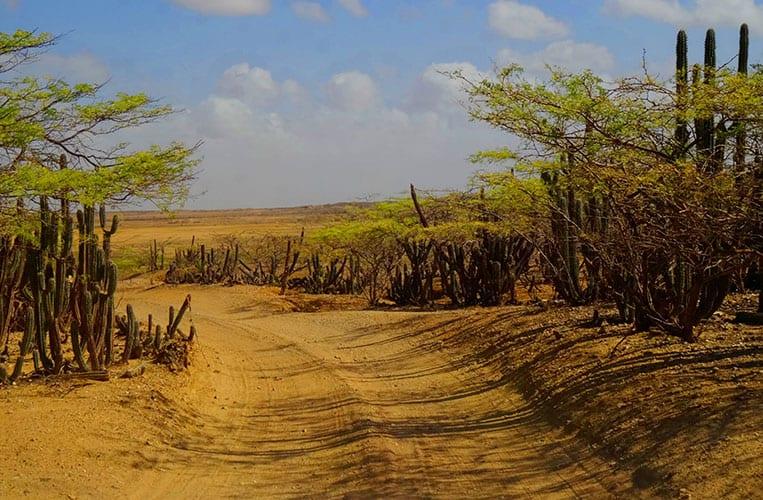 Die unbefestigte Straße von Punta Gallina zurück in die Zivilisation