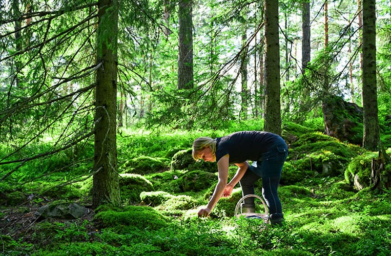 Wild Food Cooking in Finnland