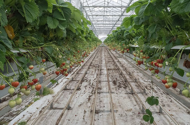 Erdbeerfarm Kalter, Overijssel, Holland