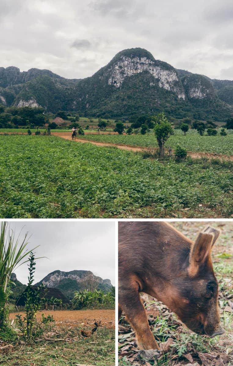 Bei den Tabakbauern im Vinales-Tal