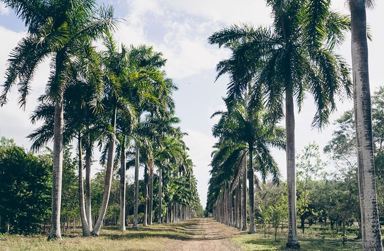 Jardin Botánico Soledad, Cienfuegos, Kuba