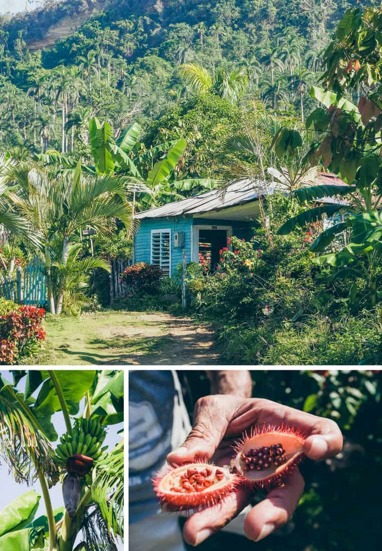 Baracoa: Das Natur- und Schokoladenparadies Kubas