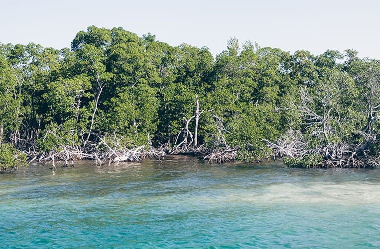 Kuba: Die paradiesische Cayo Levisa
