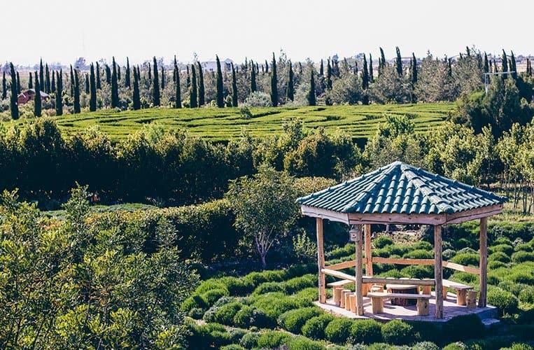 """Der botanische Garten """"Cyherbia"""" in Avgorou, Zypern"""