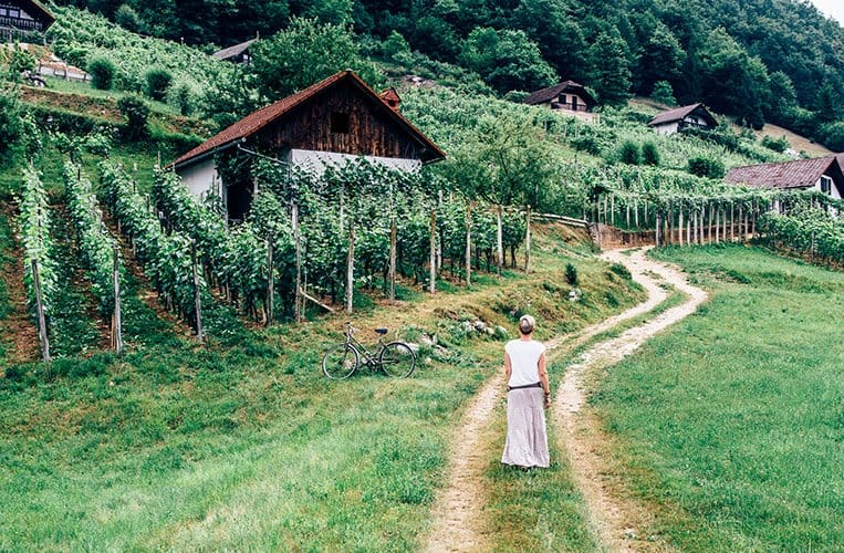 Weinberghäuschen Dolenjska – Slowenien