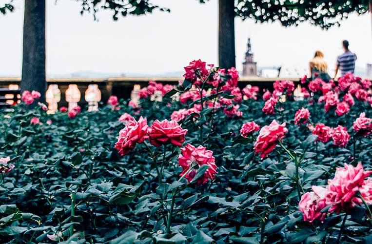 Der Rosengarten in Bamberg