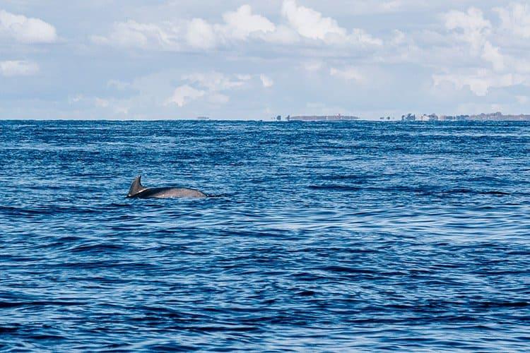 Cancale – Ausflug mit dem Delfinverein Al-Lark