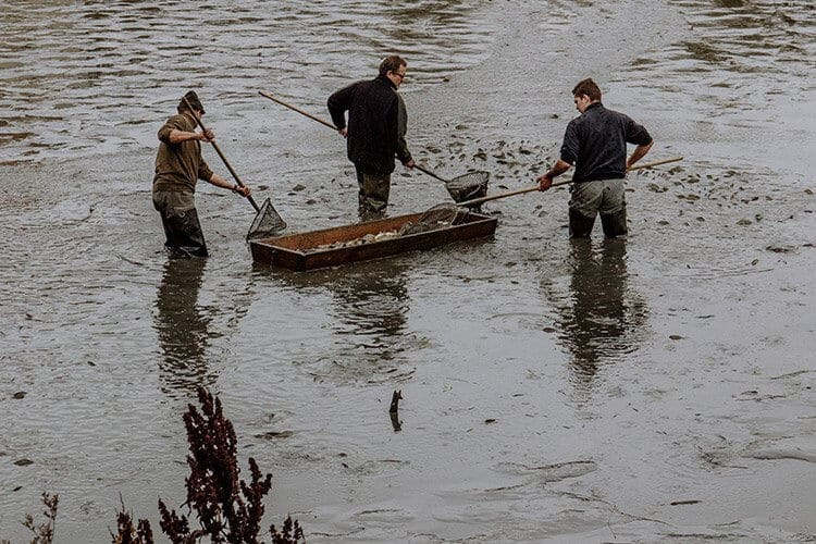 Die Fischerntewoche