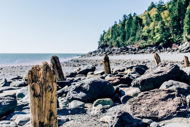 Wanderweg zum Point Wolfe