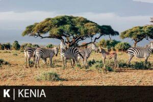 Reiseziel Kenia