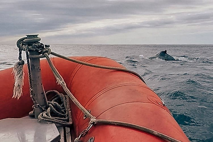Whale watching auf Long Island, Nova Scotia
