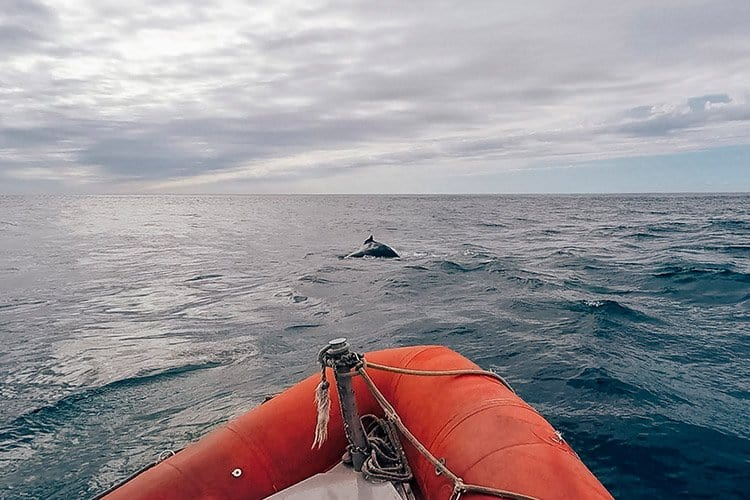 Whale watching auf Long Island, Nova Scotia