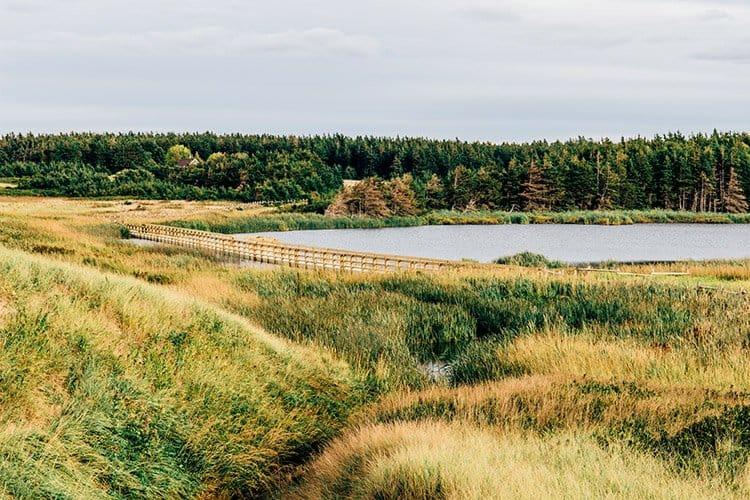 Cavendish Dunelands Trail