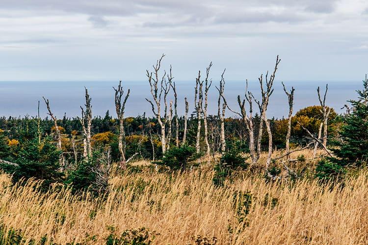 Der Skyline Trail – wo die Berge auf das Meer treffen