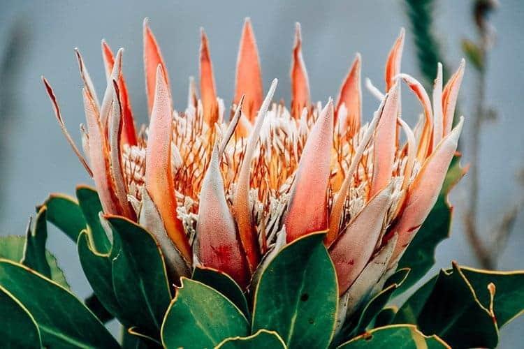 Eine individuelle Genussreise durch Südafrika mit FINEWAY