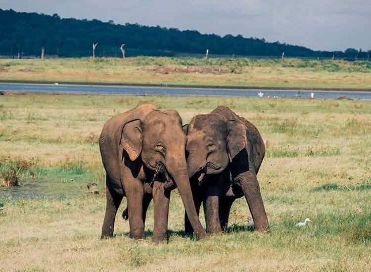Safari im Kaudulla National Park