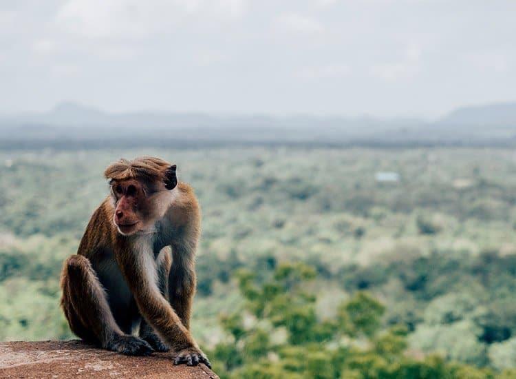Wachposten in Sigiriya