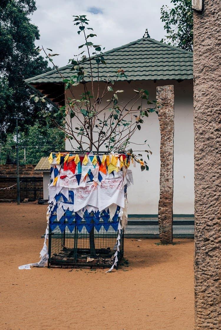 Der heilige Baum – Jaya Sri Maha Bodhi