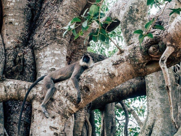 Anuradhapura – die schönsten Sehenswürdigkeiten in der Heiligen Stadt