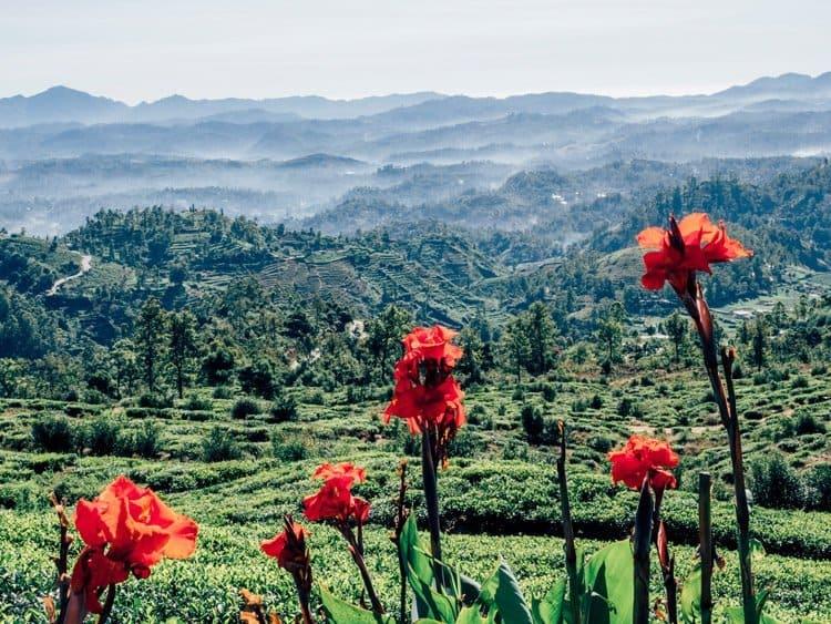 "Nuwara Eliya – ""Klein-England"" auf Sri Lanka"