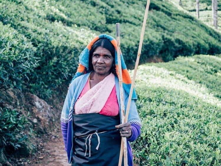 Die Teeplantagen im Hochland Sri Lankas