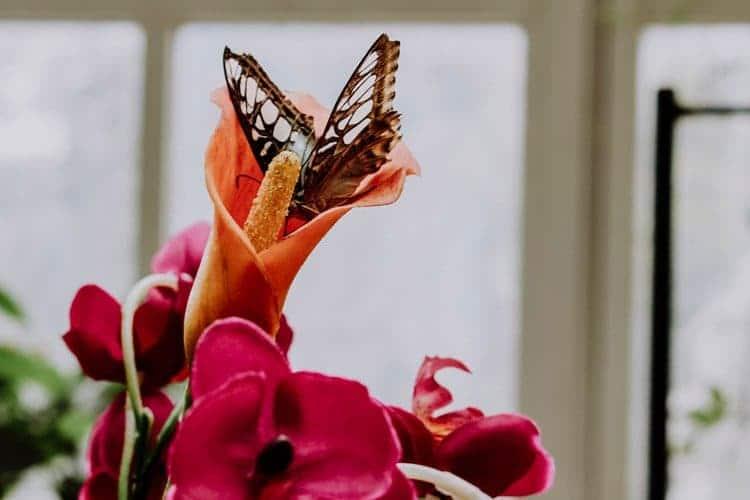 Das Schmetterlinghaus