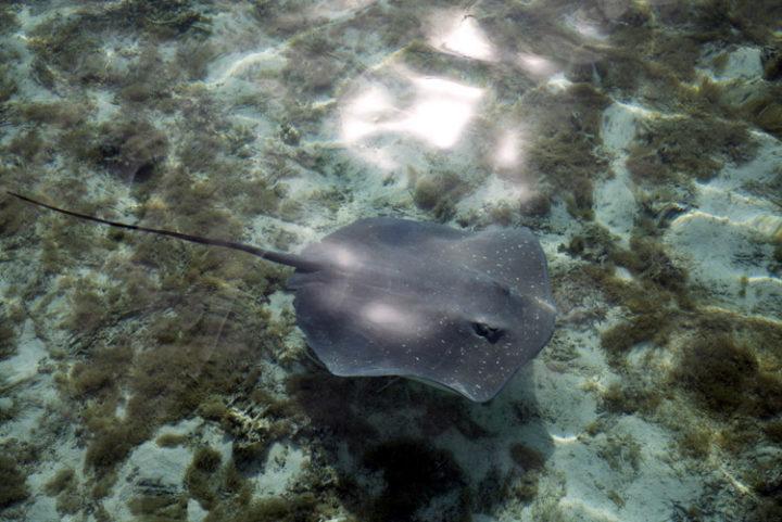 Mit Haien und Stachelrochen schnorcheln auf Bora Bora