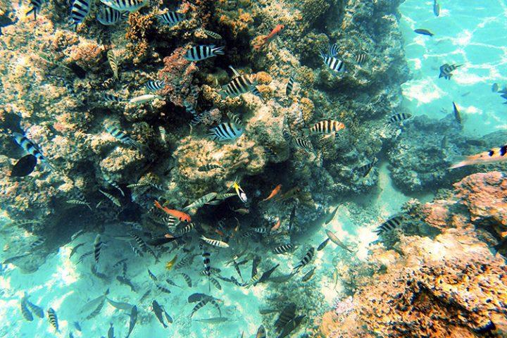 Coral Garden Bora Bora