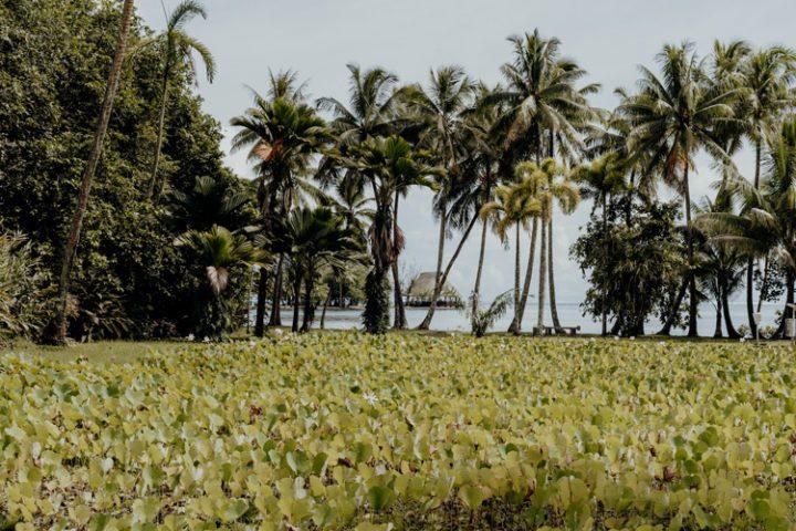 Botanischer Garten Tahiti
