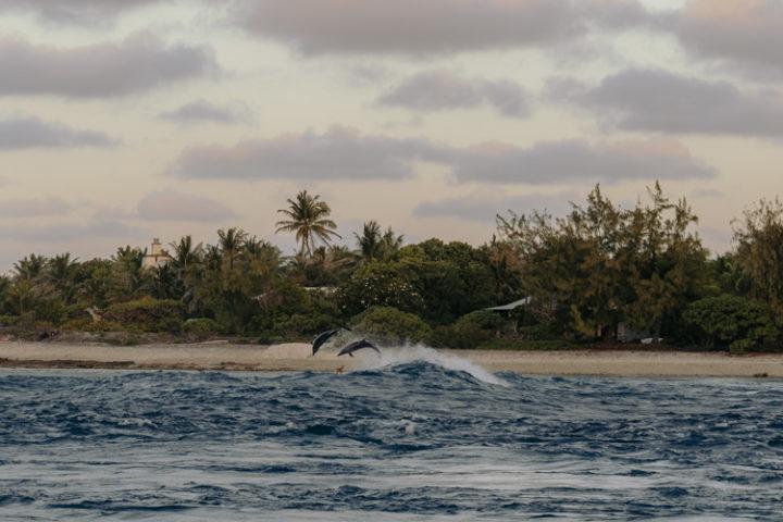 Delfine am Tiputa Pass Rangiroa Tuamotu Archipel