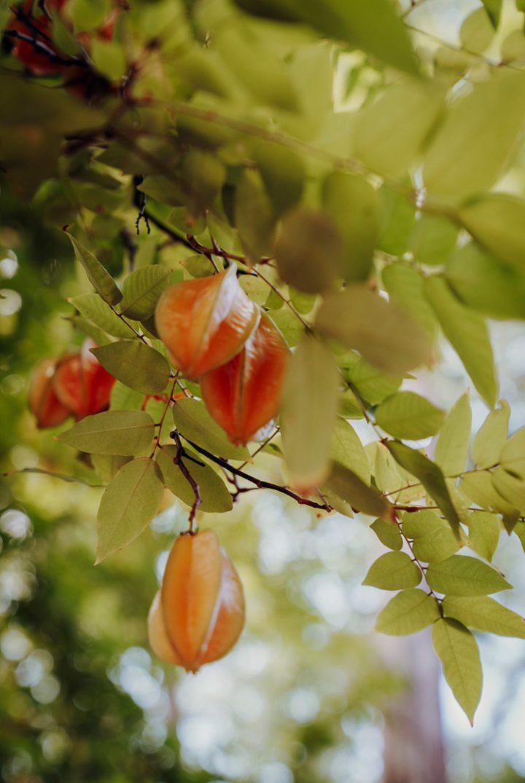 Arboretum Papuakeikaa Ua Huka Marquesas