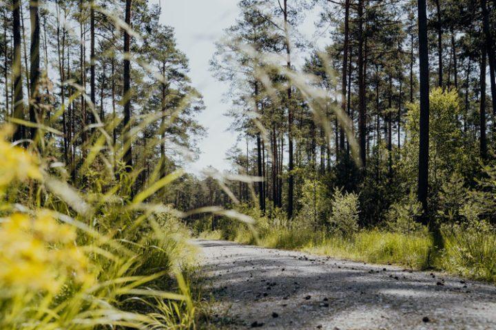 Wanderwege im Nürnberger Land – Tipp 4: Wandern durch den Tennenloher Forst